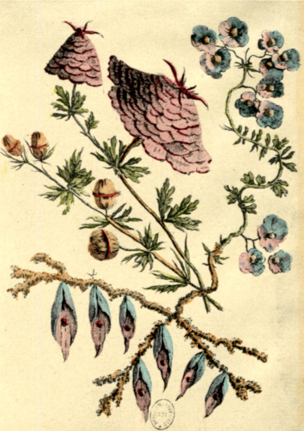 Jean Pillement. Plate 39 from Recoeil de fleurs de Caprice Inventé (1760), Engraved by P.-C. Canot.