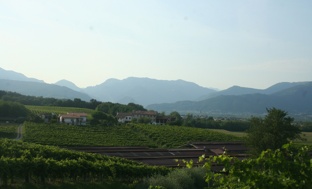 View of the prosecco vineyards and the Alpine foothills behind the Villa Bolzonello. Photograph by Paul Shaw, 2012.